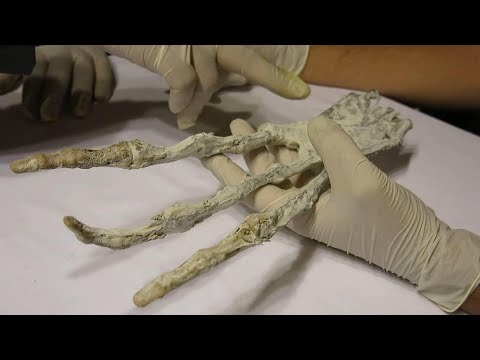 THE NAZCA ALIEN REVEALED!! IS THIS ONE STEP CLOSER TO DISCLOSURE?