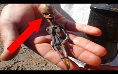 Mysterious Tiny Mummies and Skeletons